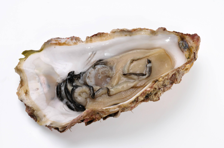 カキ 牡蠣