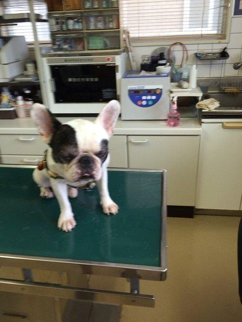 診療台の上に乗る犬